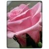 Kép 1/6 - Örök rózsa szál díszdobozban Prmémium 55cm