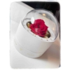 Kép 2/2 - Forever Rose Box