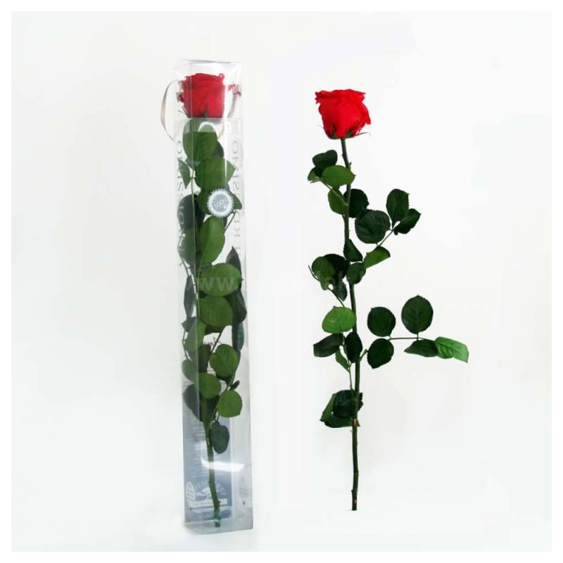Örök rózsa szál díszdobozban 55cm